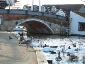 Swans and Geese at Wroxham Bridge