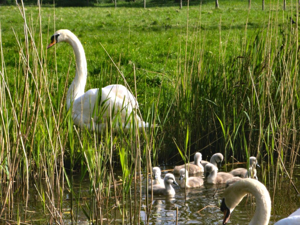 Watch the wildlife from the comfort of your narrowboat
