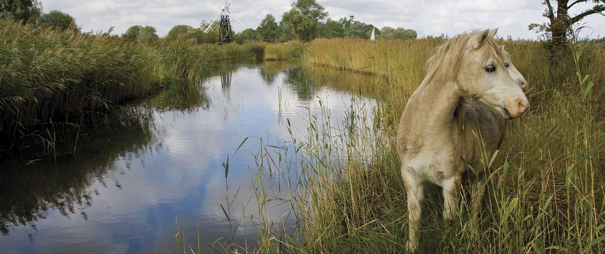 Norfolk Broads Wildlife on a boating holiday